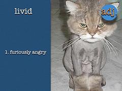 LividCat