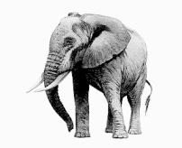 elephant_basic